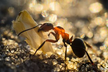 the ant carries the tentacles of the butterfly wing