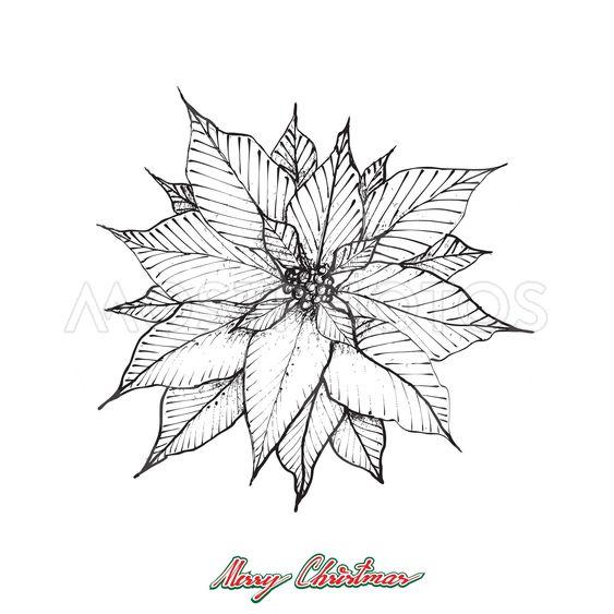 Christmas Poinsettia or Euphorbia Pulcherrima Flower
