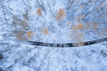 Aerial view of trees with orange leaves and a road in...