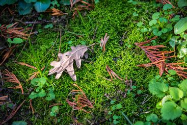 autumn leaf on moss layer in the forest