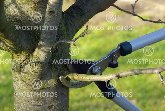 Baum verschneiden 01