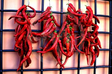 Red Peppers Hanging to Dry