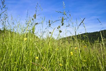 Meadow with flowers