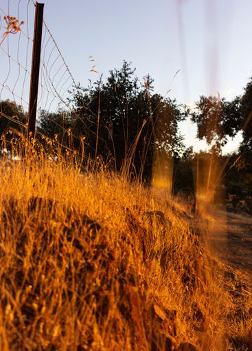 Dry land with vegetation in the golden hour in Spain