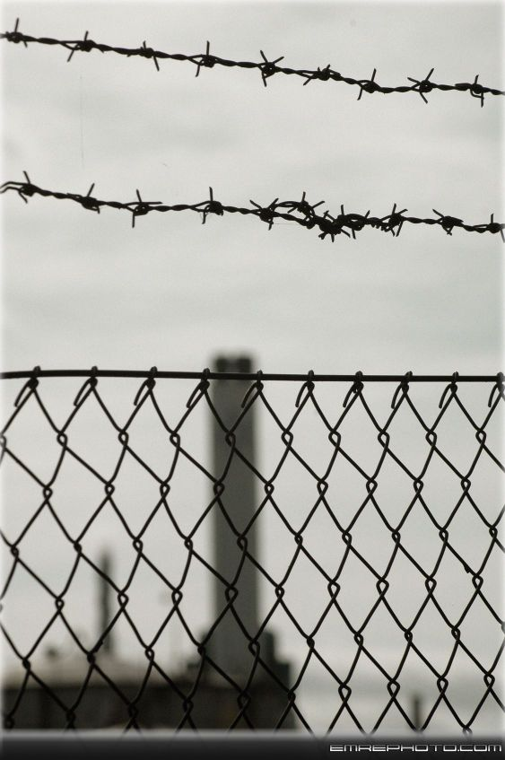 Barb Wire1