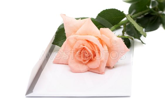 Rose and  envelope on a white background