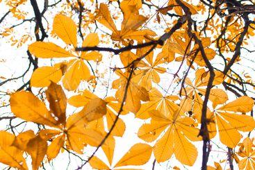 Tree in autumn sunlight