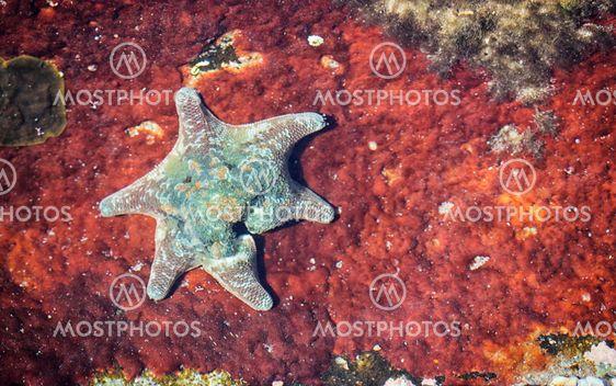 starfish on rusted metal