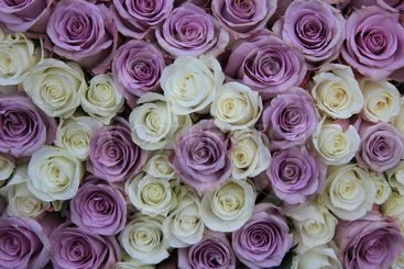 Lilac and white roses in flower arrangement