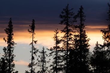 Tree silhouettes and clouds at dusk.