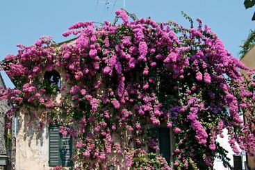 Sirmione, house detail with nice plants at the Lake of...