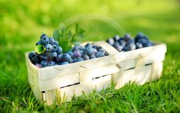 Fresh ripe blueberries in cute wooden basket on a grass...