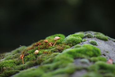 Stone overgrown by moss and little mushrooms