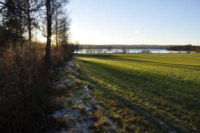 Frost on a Green Field