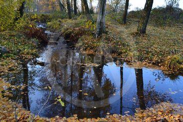 Mörk vattenspegel