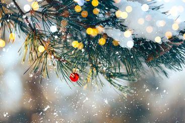 Christmas balls on tree outdoor
