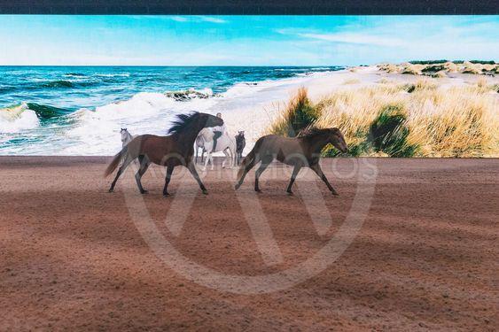JF Pignon horse show at the Sweden International Horse...