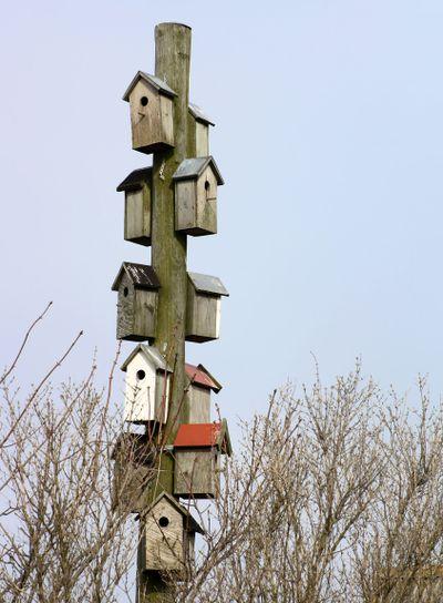 Nest boxes Bird houses | Nistkästen
