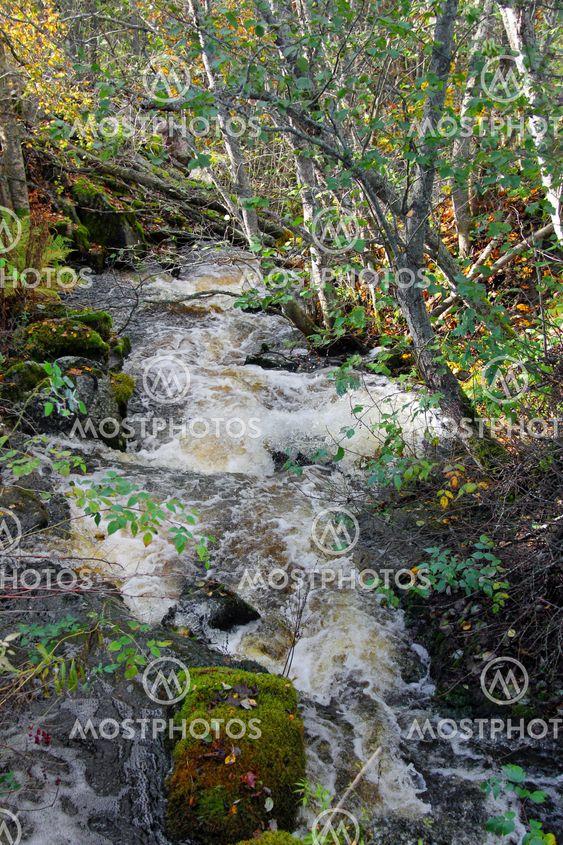 Small Natural Brook
