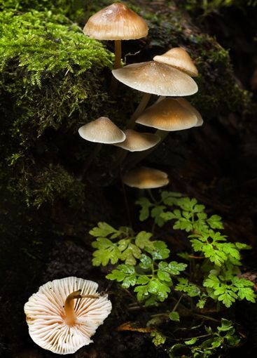Small group of mushrooms in fall