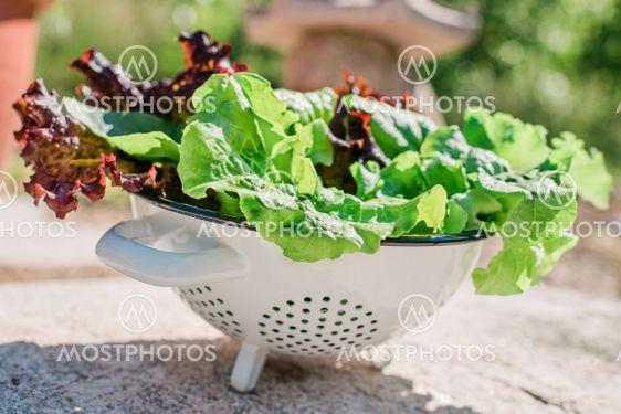 grönt och skönt för magen