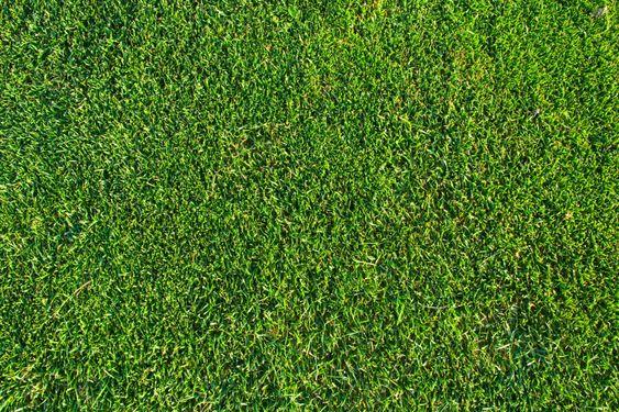 Gräs mönster