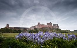 Bluebells and Bamburgh Castle in Northumberland England