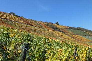 Colorful wine fields in the hills