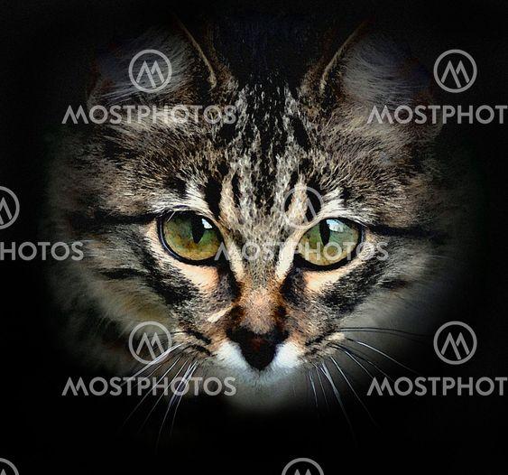 Manipulerede kat