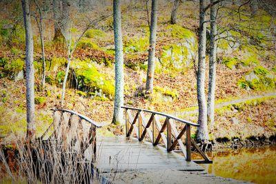 Bro över dammen