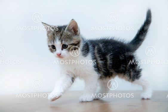 Cat Kid 1