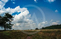 Field ar meadow with trees and blue sky