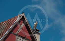 stork standing on chimney of alsacian medieval...