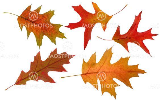 five autumn leaves