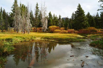 High Sierra Meadow In Autumn