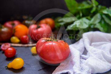 Colorful tomatoes, red tomatoes, yellow tomatoes, orange...