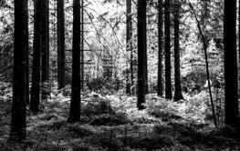 Träden och grönskan