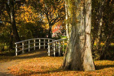 White bridge and colorful autumn leaves