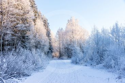 En kylig dag i skogen