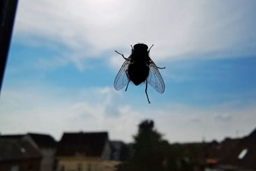 Fly at the window