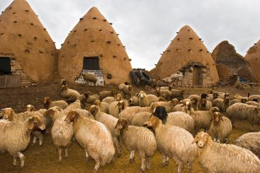 Conical Mud Houses