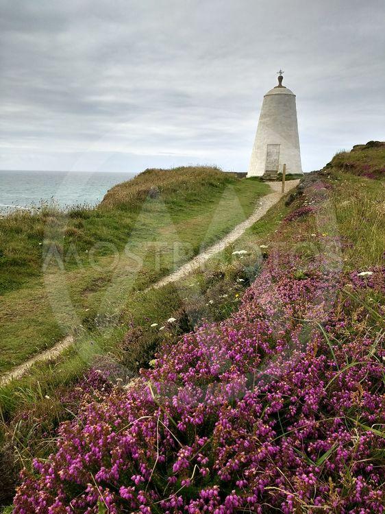 Colourful heather, Portreath Cornwall UK