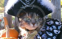 Aaargh.. I Be a Pirate Cat