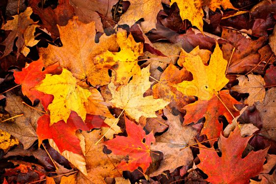 Fall Leaves Background By Elena Elisseeva Mostphotos