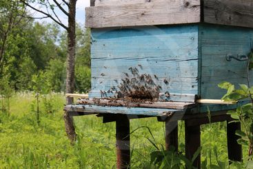 bee hive entrance is