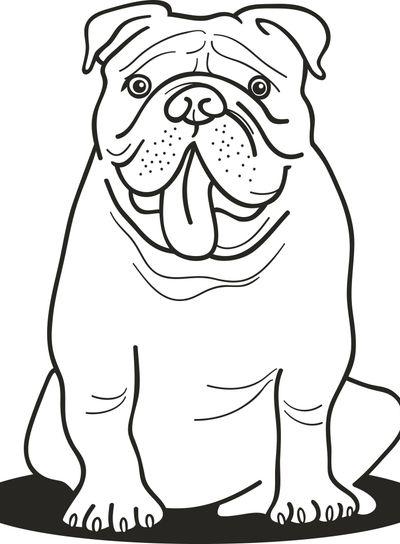 bulldog for coloring book