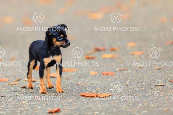 Animals - little dog cute puppy pet outdoor