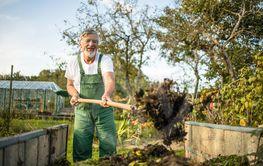 Senior gardener gardening in his permaculture, organic...