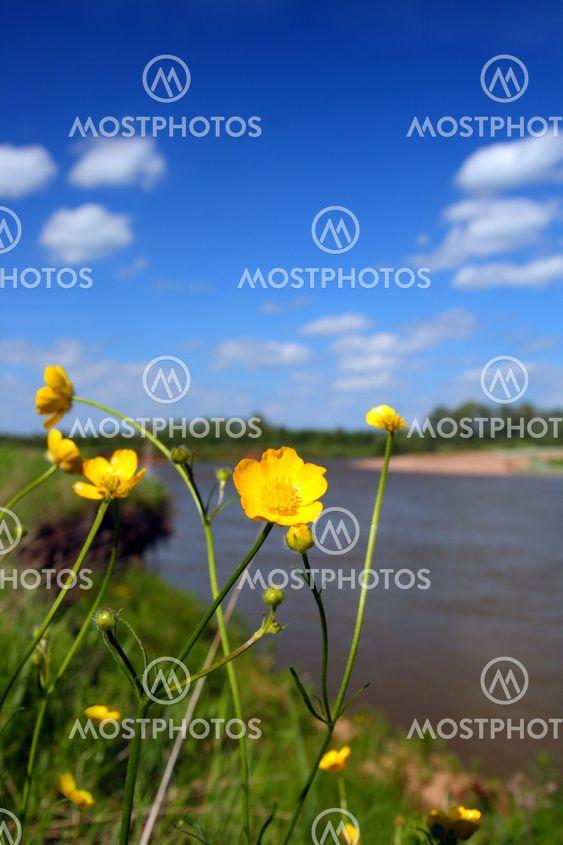 blomster nær floden i sommer