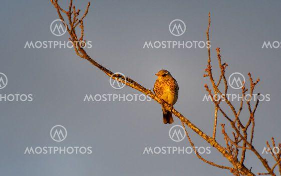 Det satt en fågel på en gren i det fina kvällsljuset